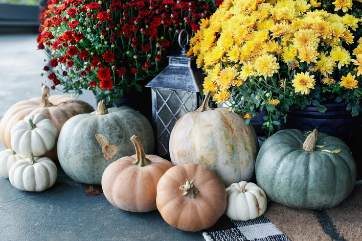 Display of multi-colored pumpkins on a front porch