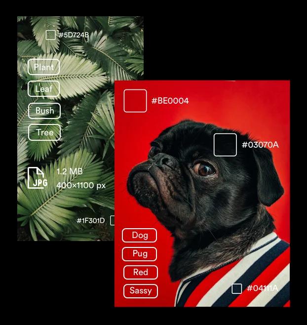 Brandfolder AI image tagging