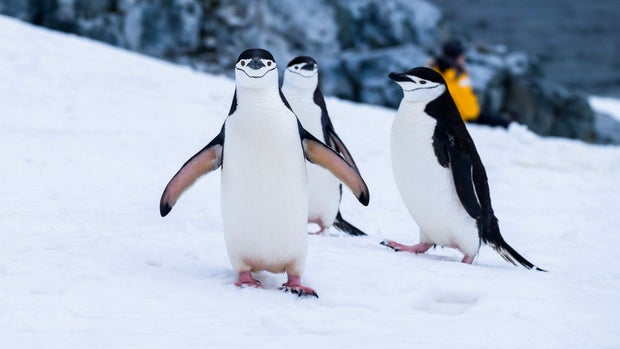 penguins on snow covered fields during daytime in antarctica