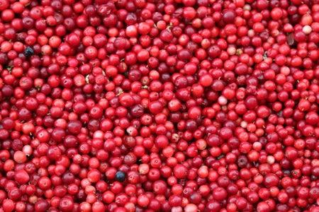 cranberry bog