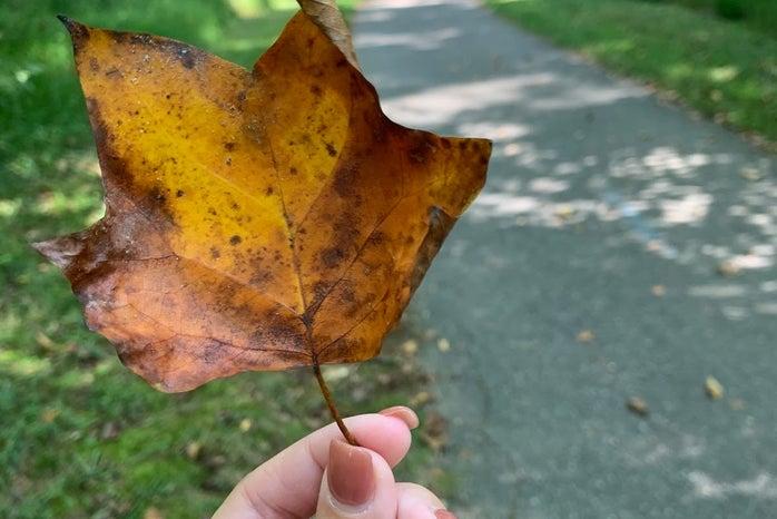 fall leaf in hand