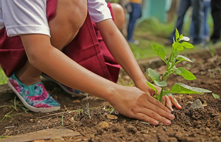 person planting a green plant