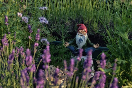 gnome meditating by lavender
