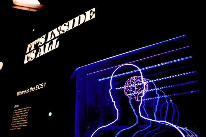 """light up sign of a human brain that says \""""it\'s inside us all\"""""""