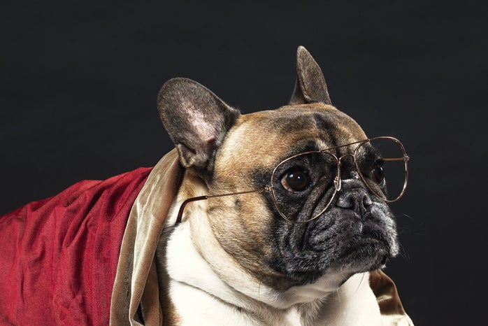 A dog wearing a costume with glasses