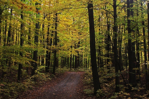 Country Road with fall trees
