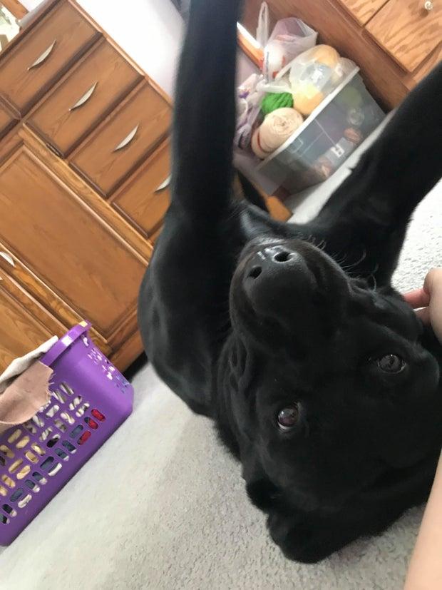 Annie Zalewski's Dog