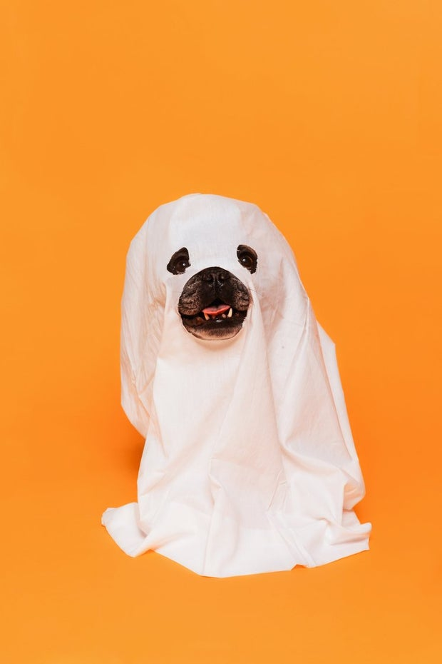 Dog in a halloween costume with glasses