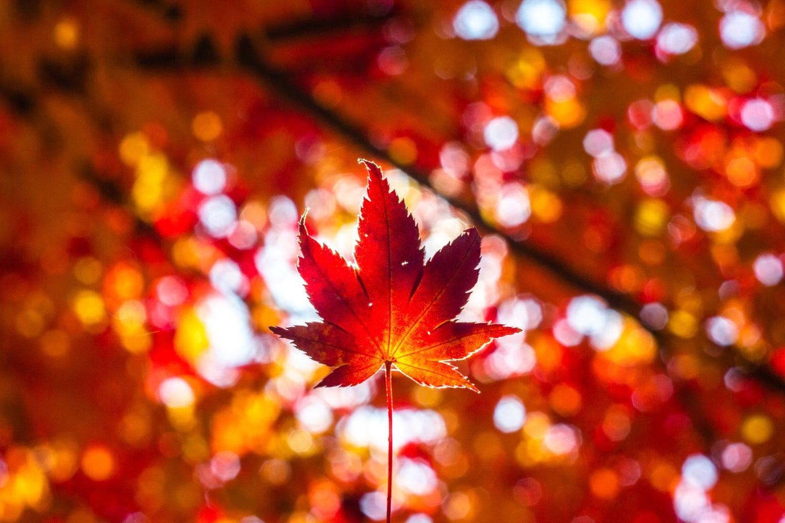autumn leavings