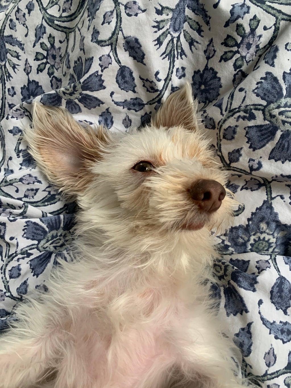 My dog Edith