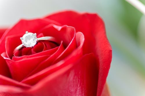 silver-colored rose with ring