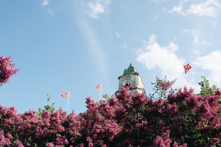 lilac bushes and Norwegian flags