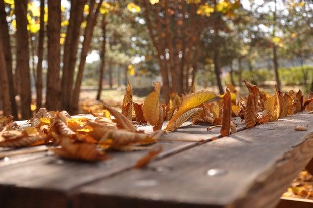 fall leaves on table