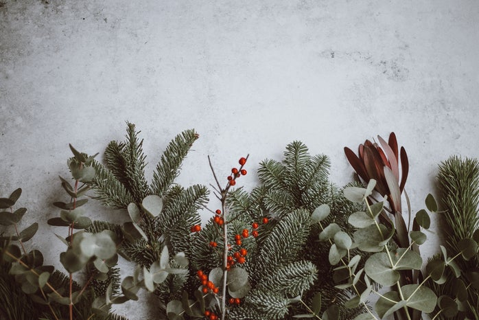 flat lay of holly and other plants