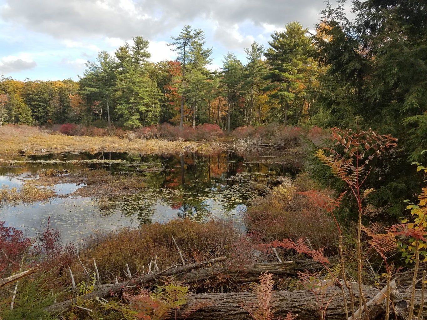 Picture of a swamp and forest