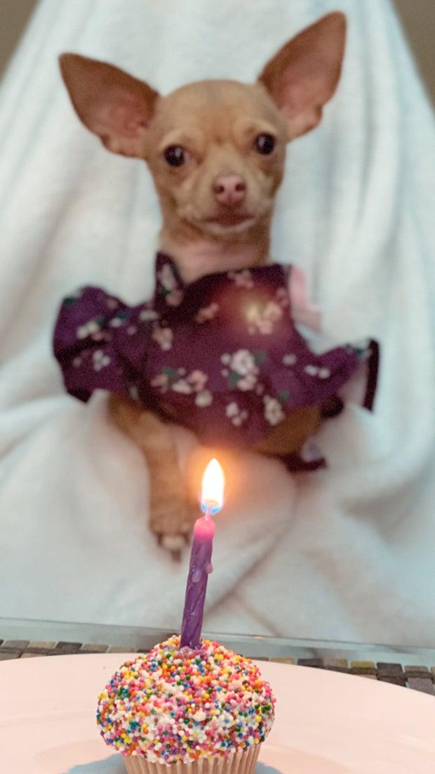 Birthday Celebration of my dog