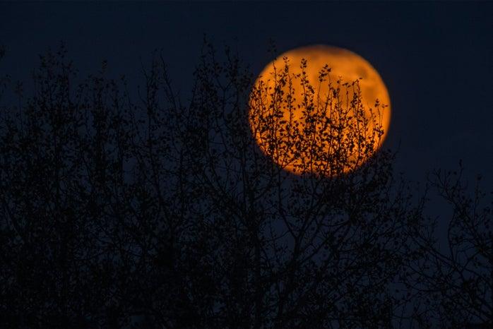 Night sky with orange Moon