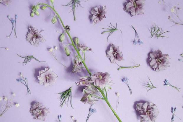 violet flowers on purple backdrop