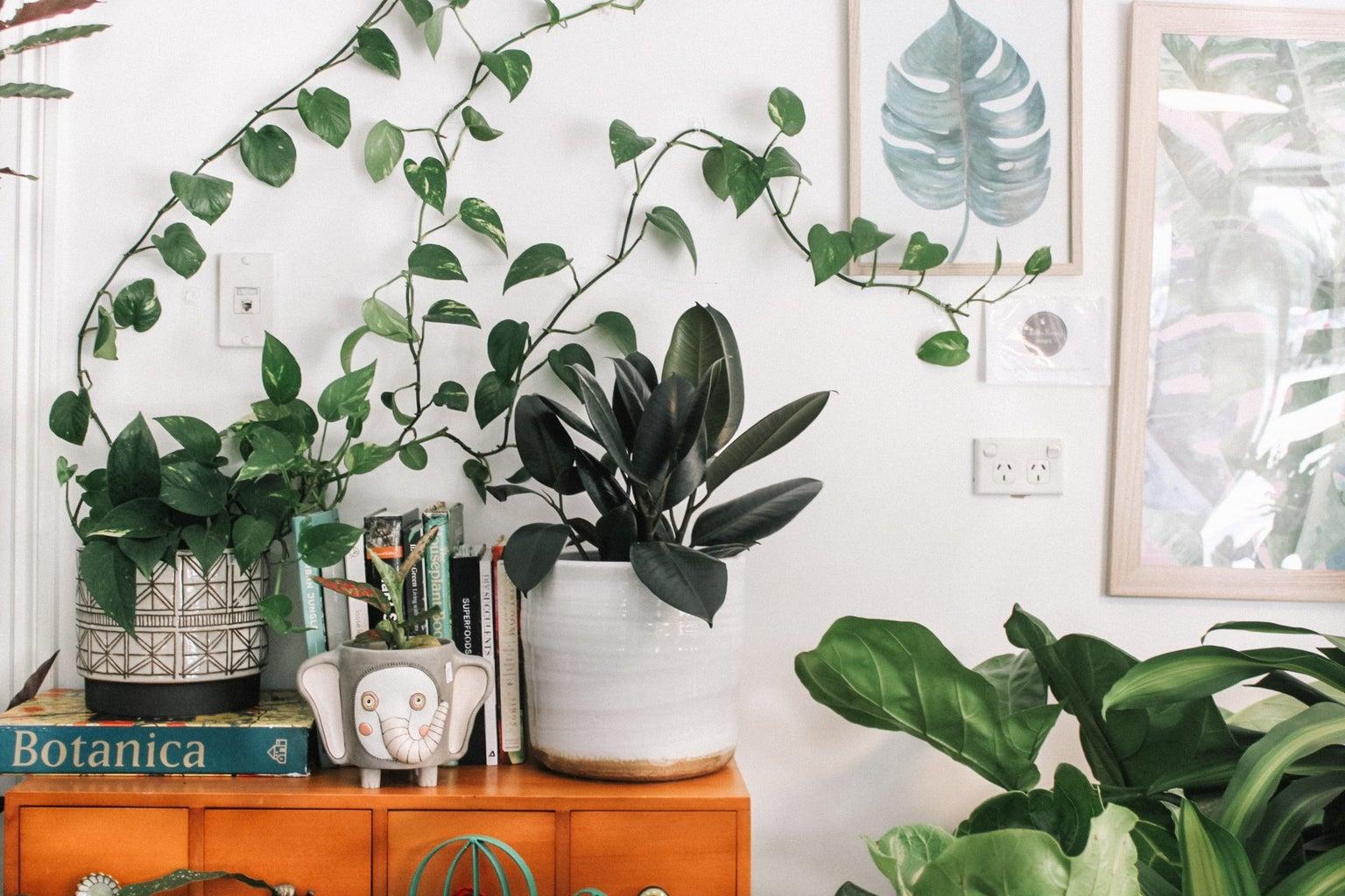 Plants in fun pots on a shelf