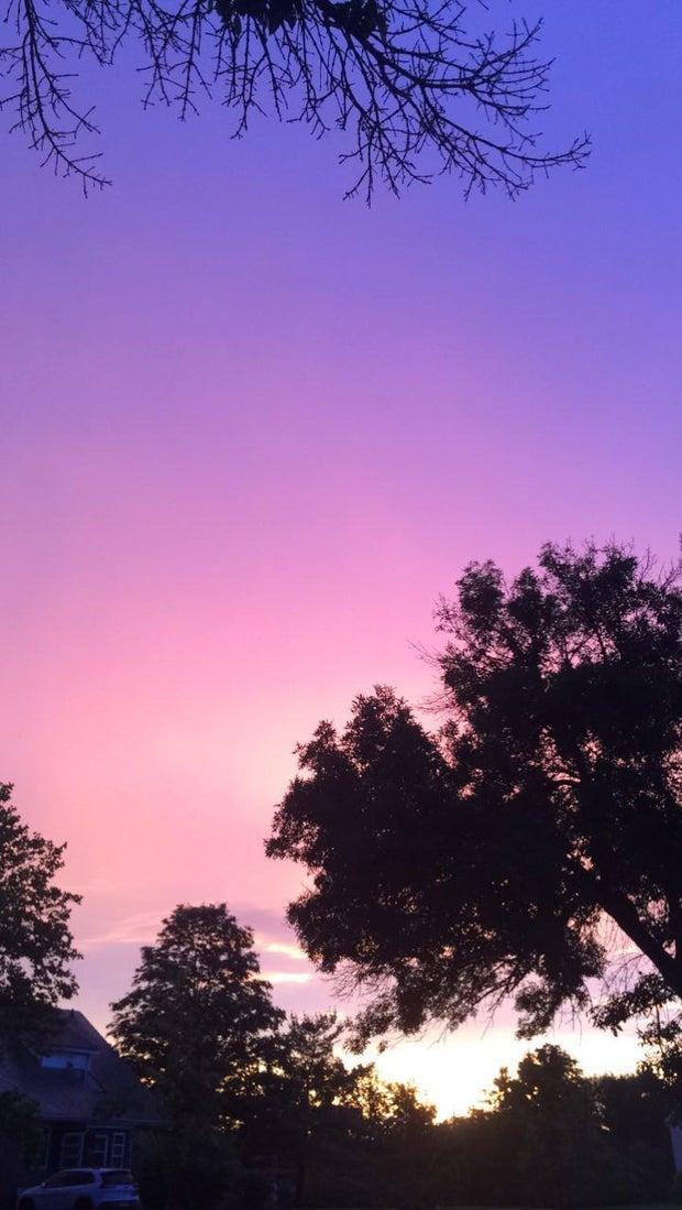 blue/purple/pink sky with dark trees