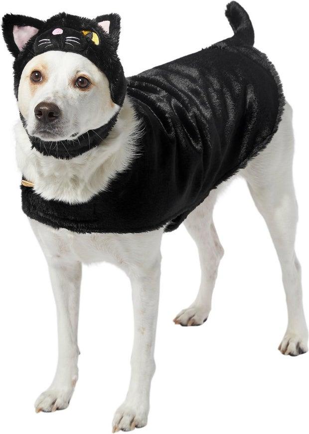 black cat dog costume