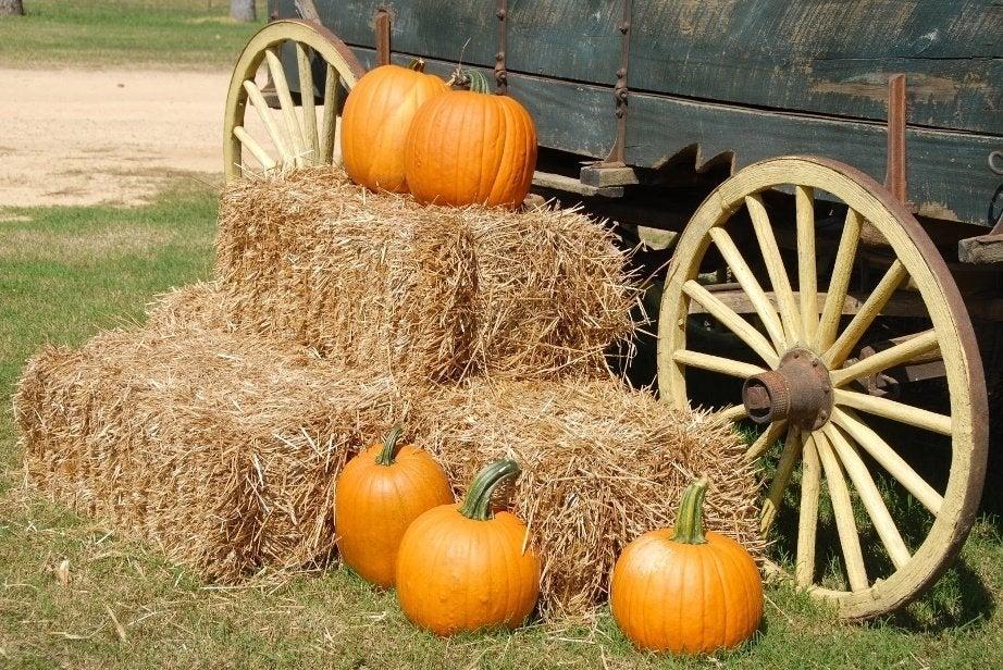 pumpkins on a hay bail