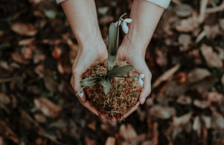 Hands holding a flower over brown ground.