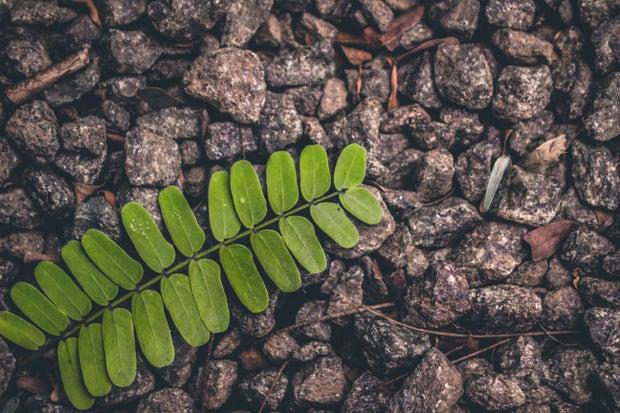 green fern on gravel