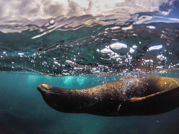 sea lion and ocean in close detail