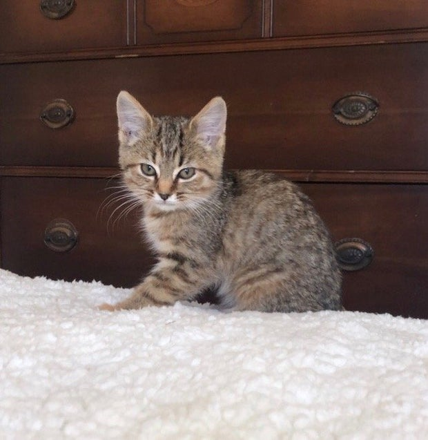 kitten sitting up