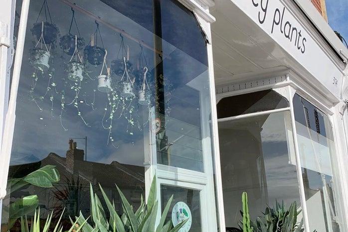 Bristol Shop Fancy Plants