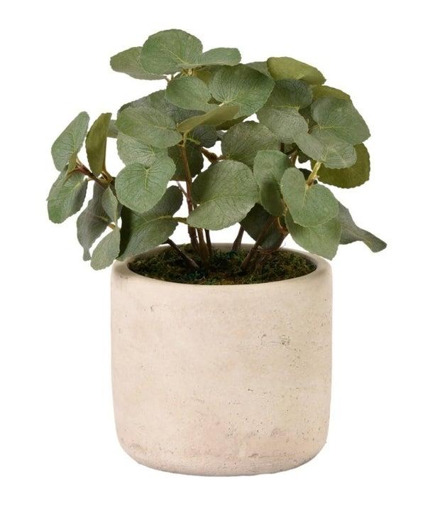 Eucalyptus planter decor