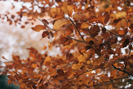 tree with orange and brown leaves