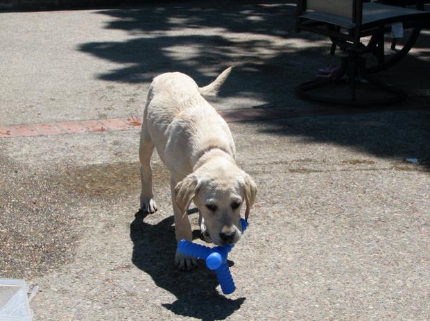 Photo of Madison Hoffman's dog Bella