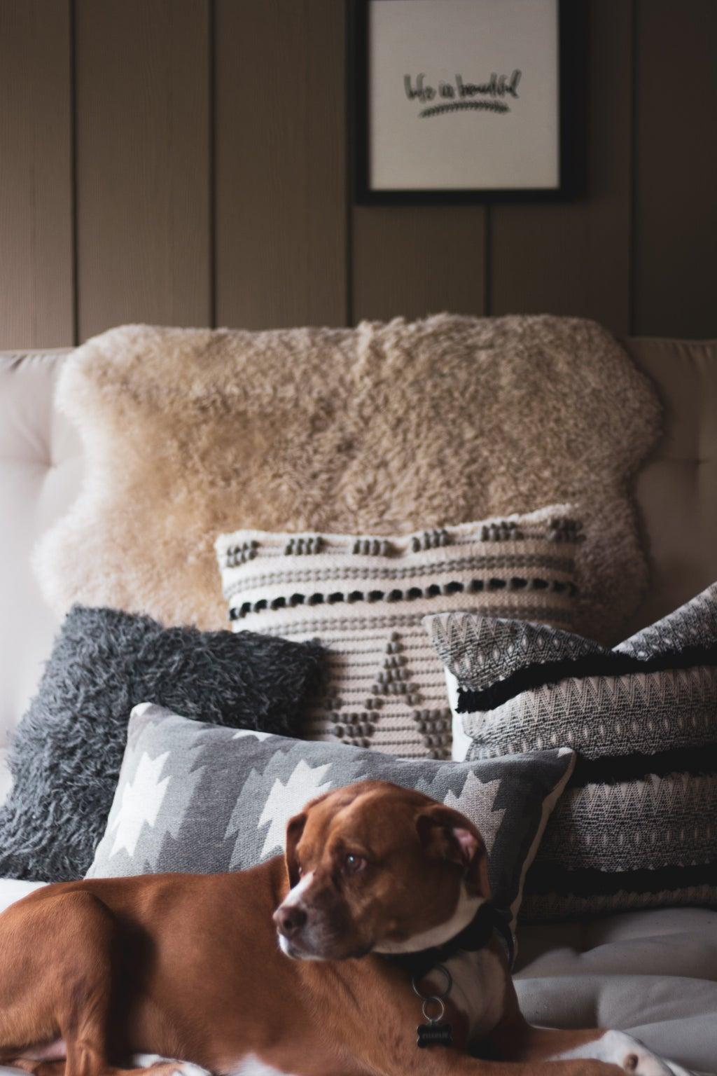dog on sofa photo