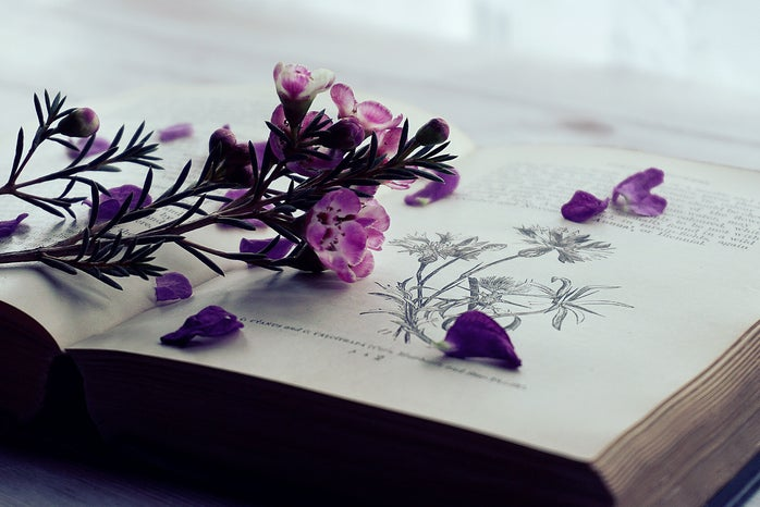 purple flowers and petals laying on open book
