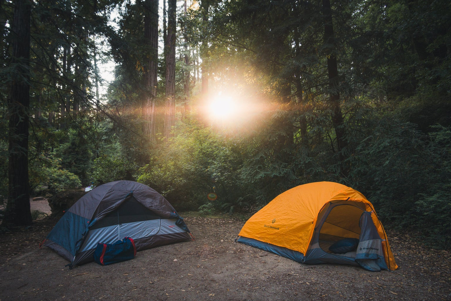 camping tents in forrest