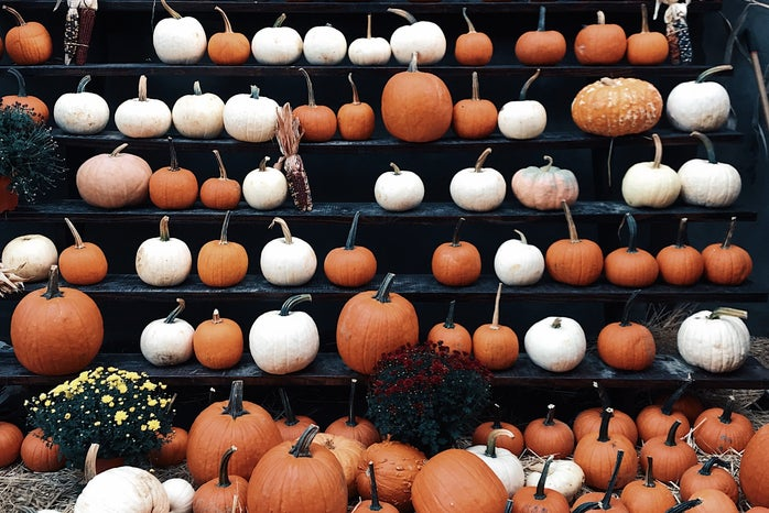 orange and white pumpkins on shelves
