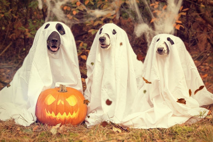 dog ghost halloween costumes