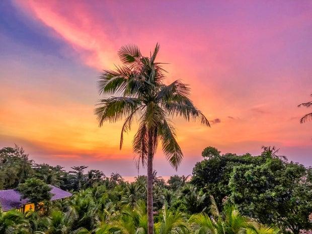 green palm tree during sunset photo in Phu Qouc, Vietnam