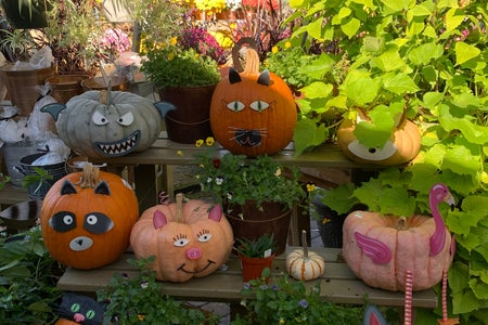 Pumpkins with animal faces on them