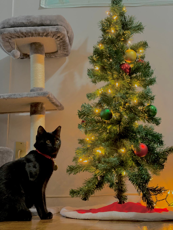 Black Cat under Christmas Tree