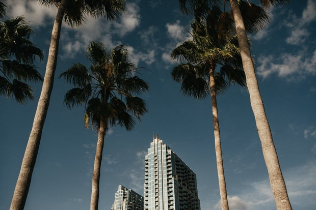 downtown tampa palm trees