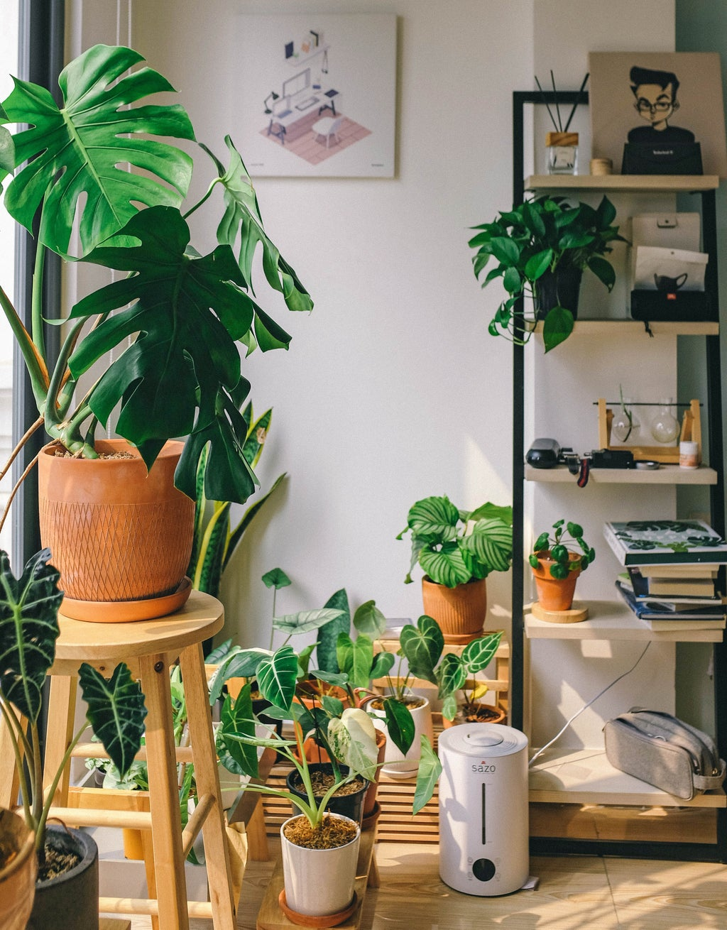 Plants in a house