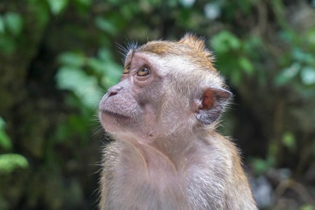 Nanyang Wildlife Reserve brown monkey