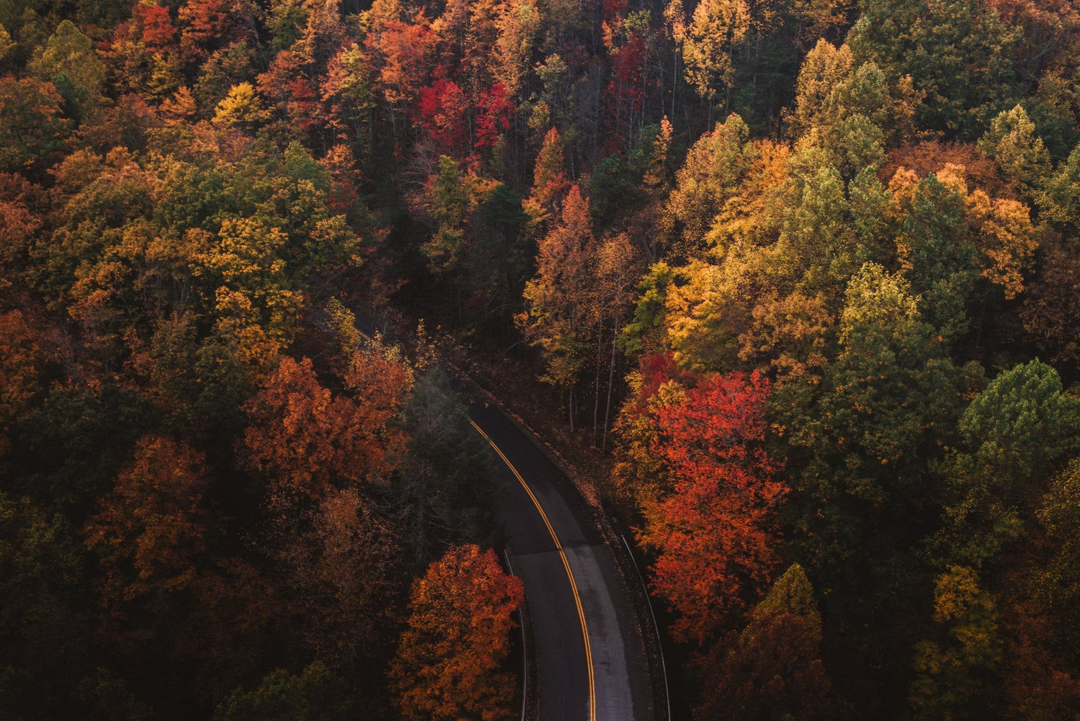 fall trees and road