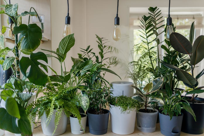 Row of potted plants
