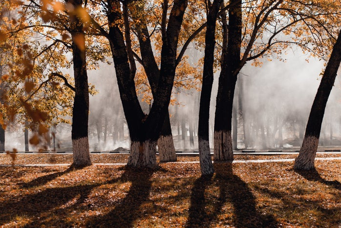 Photo of trees in Fall time, with fog, and leaves different colors
