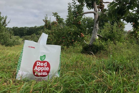 bag of apples in the orchard