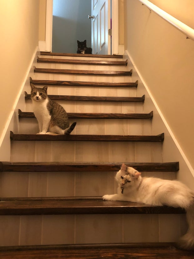 Three of Abi's rescued cats. (My profile subject)